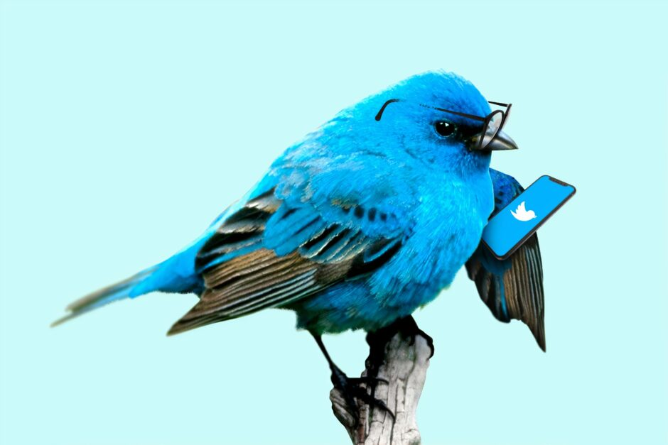 blue bird on brown tree branch